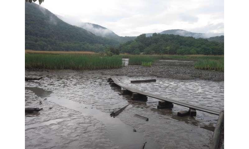 New York City area wetlands may be unwitting generator of greenhouse gasses