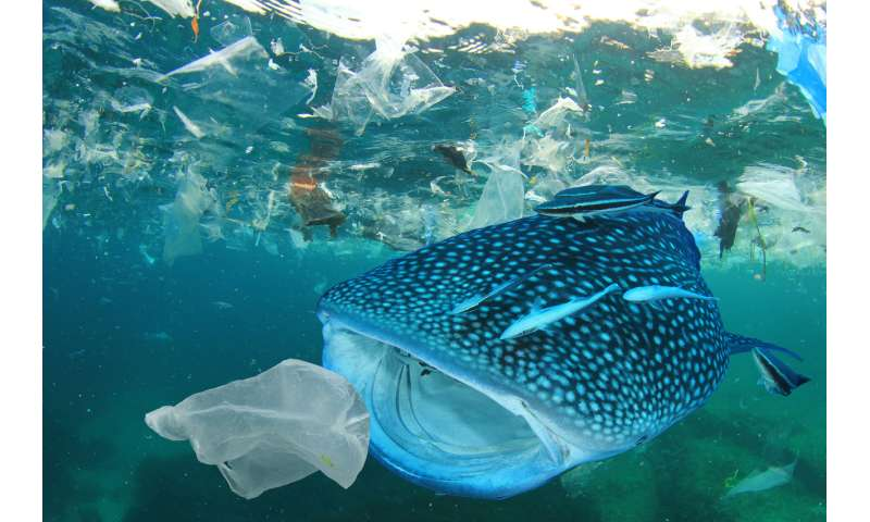 Not all marine fish eat plastics