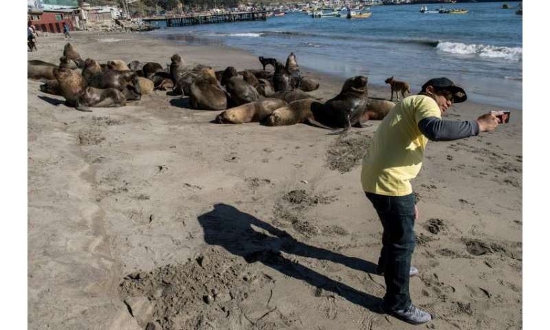 Not everyone is as angered by sea lions as Chile's fishermen, and the country's fisheries under-secretary Eduardo Riquelme says