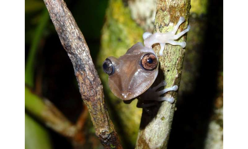 Not too big, not too small -- tree frogs choose pools that are just right