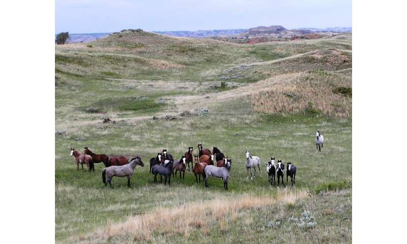 Novel study shows promise for managing wild horse populations