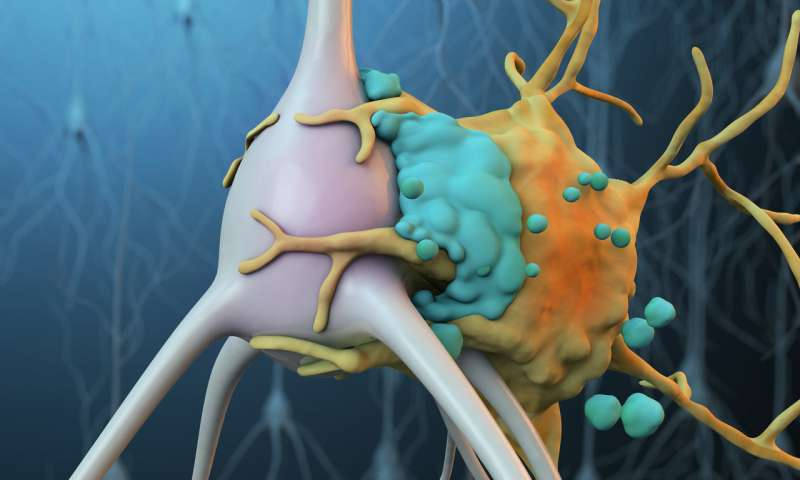 Novel therapy inhibits complement to preserve neurons and reduce inflammation after stroke