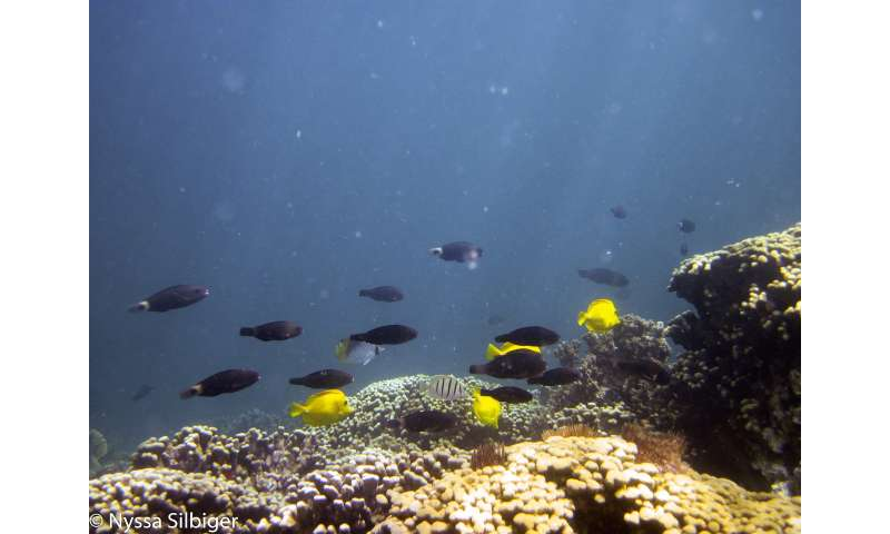 Nutrient pollution makes ocean acidification worse for coral reefs