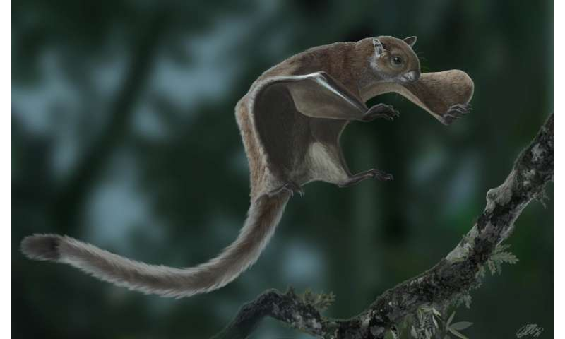 Oldest fossil of a flying squirrel sheds new light on its evolutionary tree