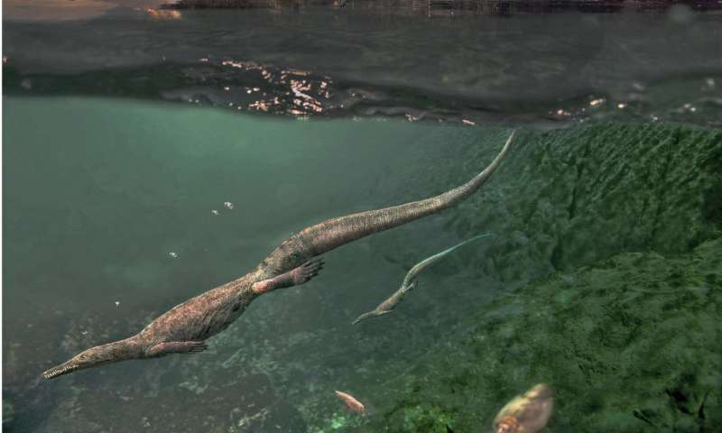 Oldest-known aquatic reptiles probably spent time on land