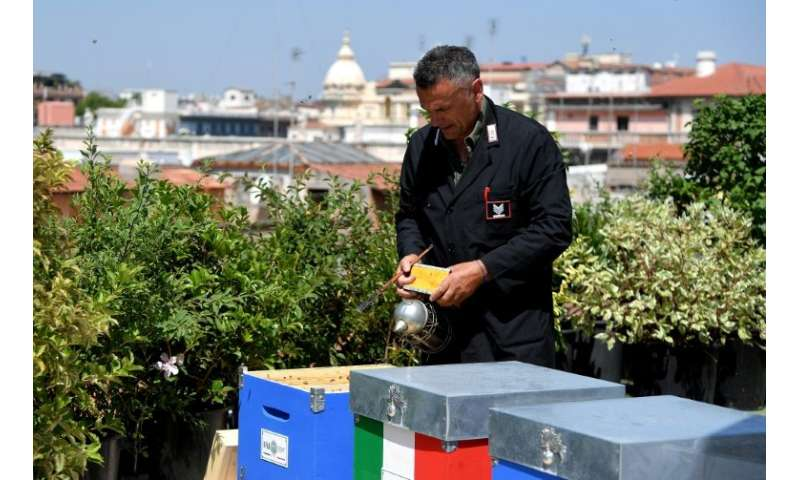 On the roof of a building in the heart of the capital that houses the Italian Federation of Beekeepers (FAI), 15 beehives are ab
