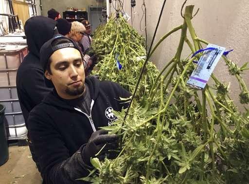 Oregon marijuana: Lots of data, few to analyze and check it