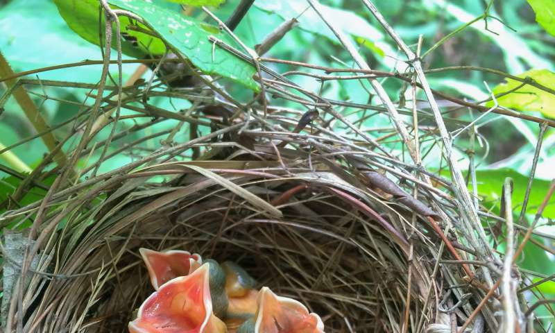 Original habitat is best, but restoration still makes a big difference