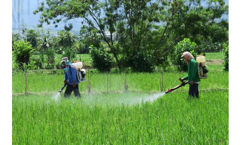 Overuse of agricultural chemicals on China's small farms harms health and environment