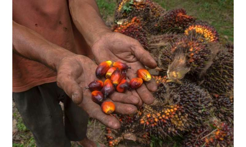 Palm oil has become a major earner for Malaysia and Indonesia but at huge environmental cost