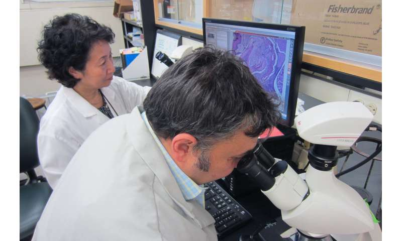 Periodontal disease bacteria may kick-start Alzheimer's