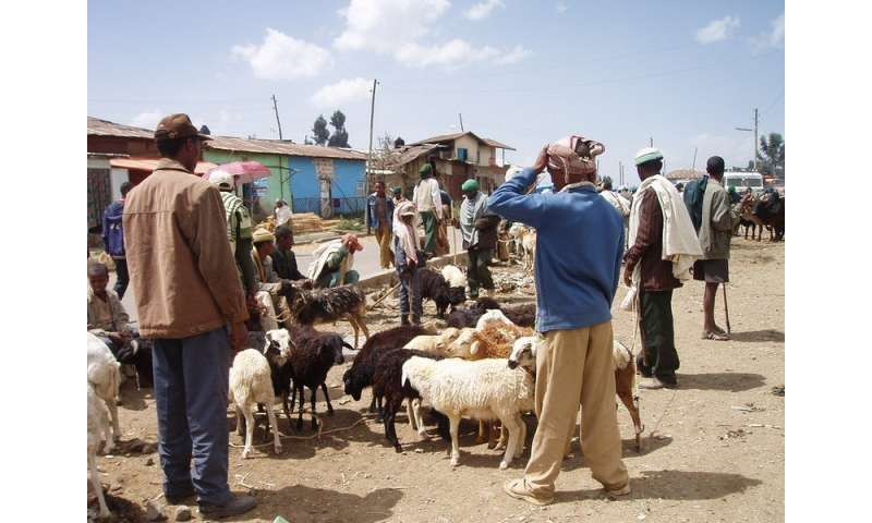 Peste des petits ruminants: a model for use in eradicating the disease