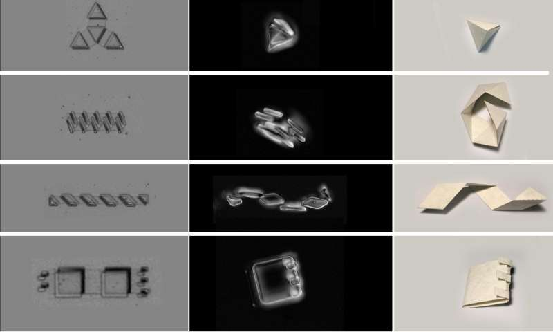 Physicists build muscle for shape-changing, cell-sized robots