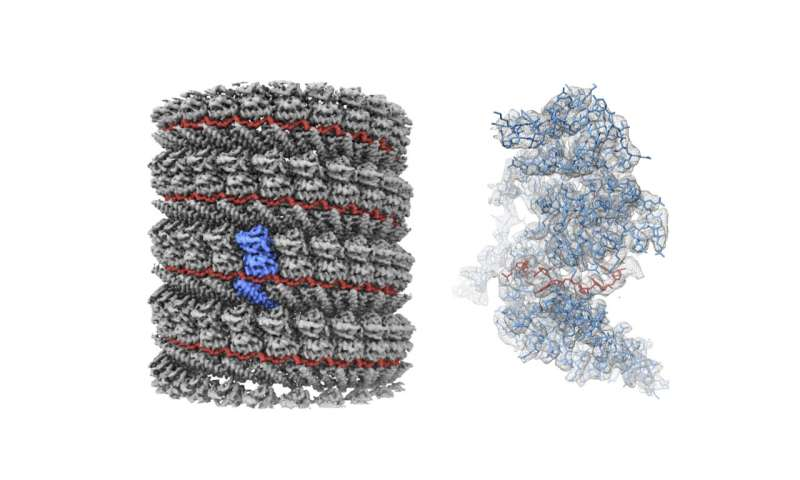 Picture perfect: Researchers gain clearest ever image of Ebola virus protein