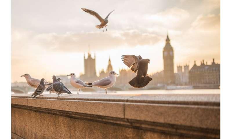 [Image: pigeons.jpg]