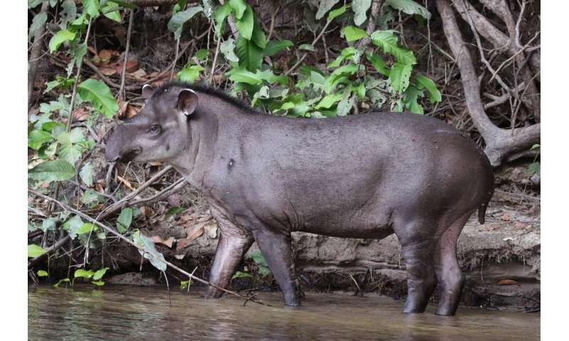 Pioneering study predicts true impact of roadkill on wildlifeAug16