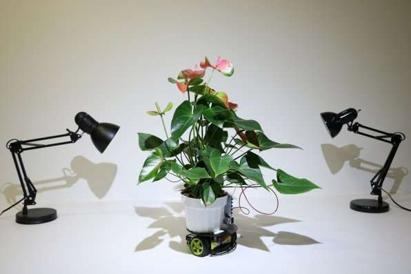 **Plant cyborg able to move itself to a preferred light source