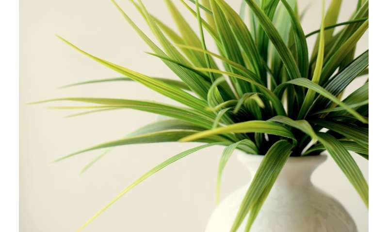 Using the right plants can reduce indoor pollution and save energy
