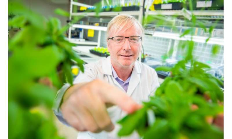 Plants don't like touch: Green thumb myth dispelled