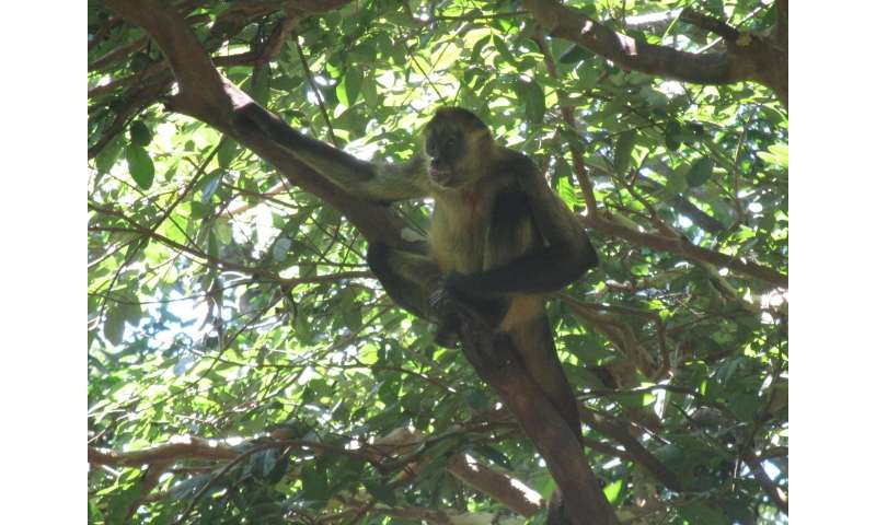 Plants faring worse than monkeys in increasingly patchy forests of Costa Rica