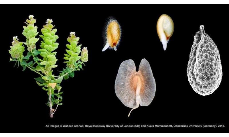 Plants find ways to survive no matter the terrain