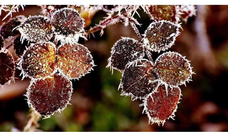 plants frost
