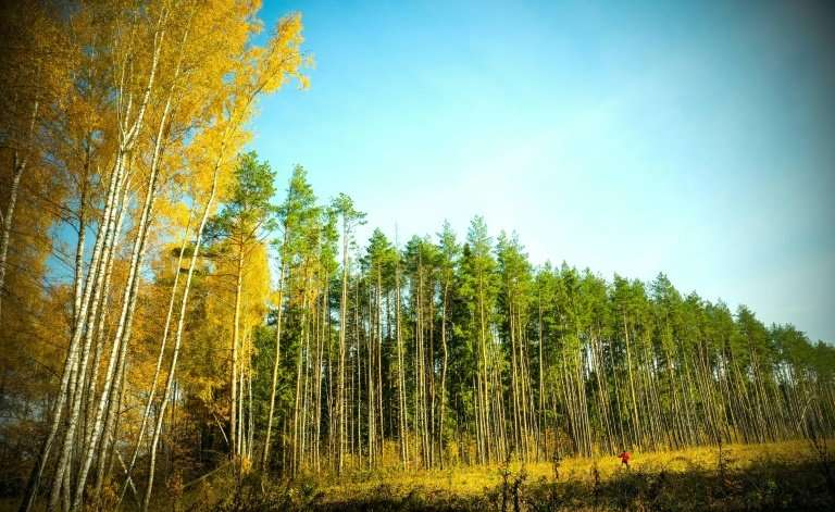 Poland's president, who will host a major UN climate summit in December, advocates protecting forests as one of the ways to comb
