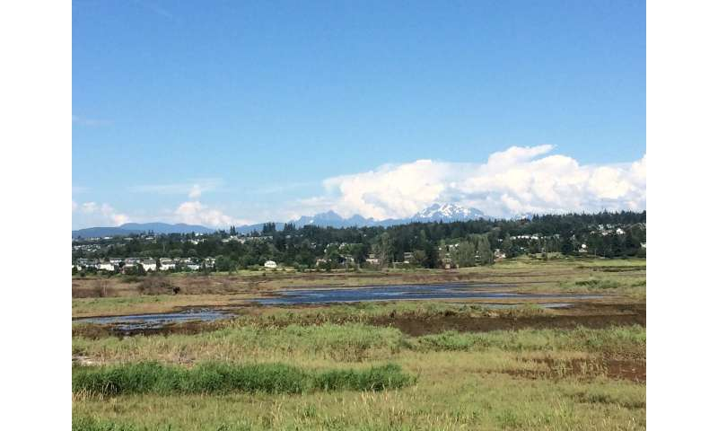 Policy pivot: A new emphasis on restoration to protect Puget Sound
