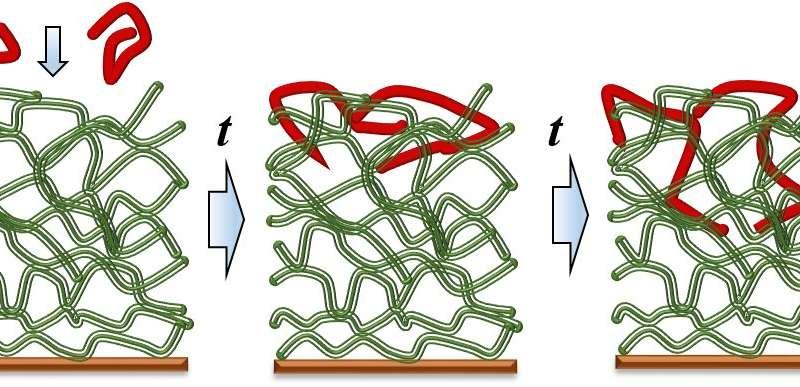 Polymer movement: key to next-generation coatings