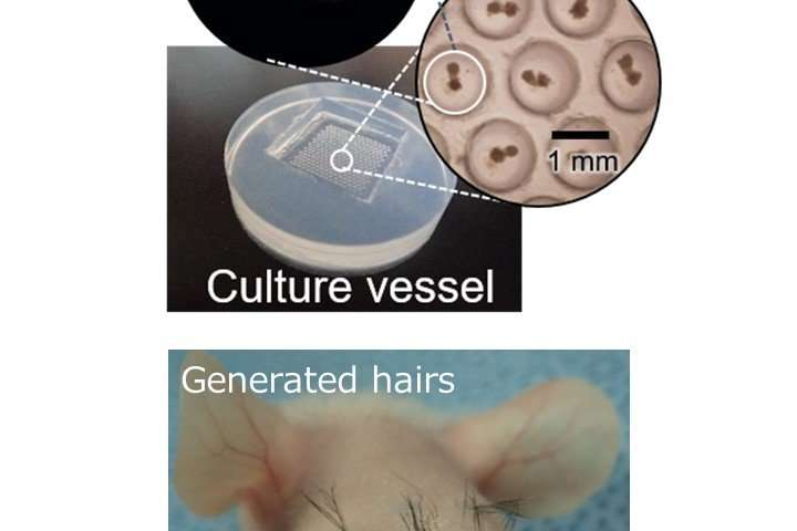 Practical hair regeneration technology