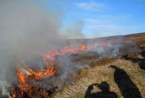 Prescribed burning not as damaging as previously thought