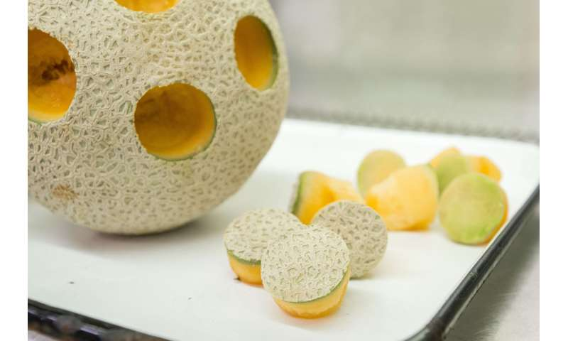 Probiotics effective in keeping cantaloupes safe to eat