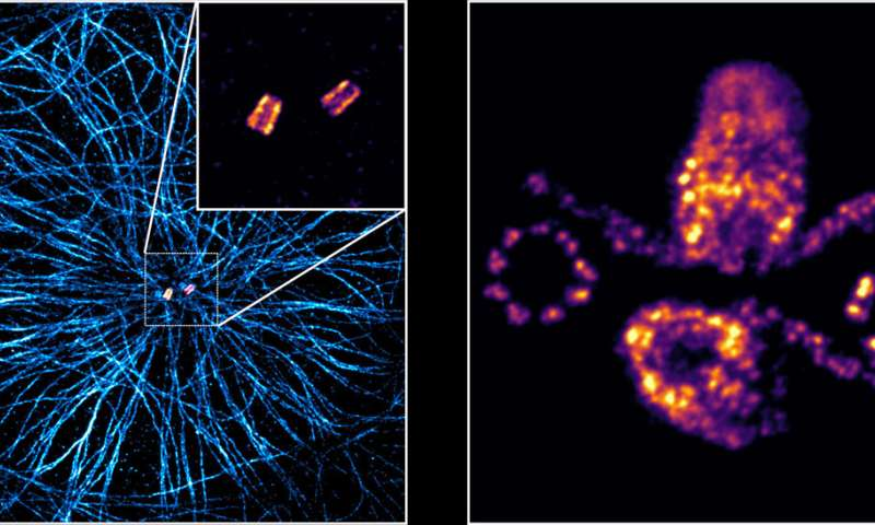 Progress in super-resolution microscopy