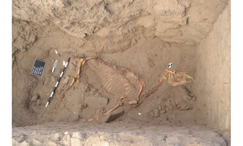 Purdue archaeologists on ancient horse find in Nile River Valley