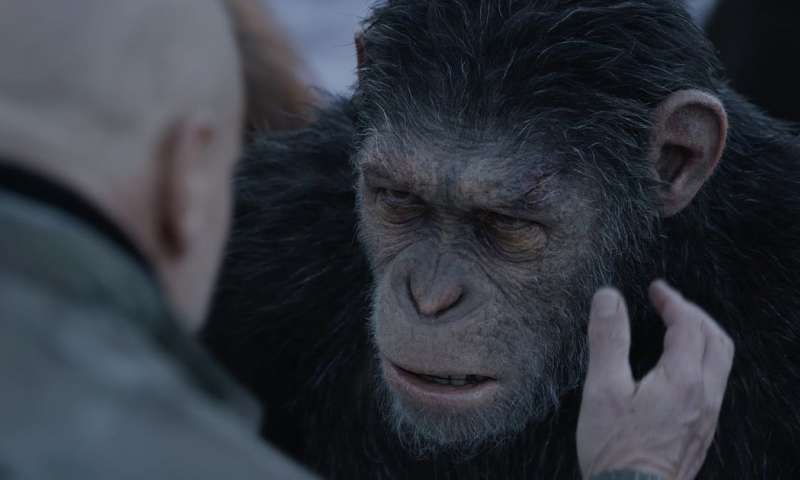 Putting primates on screen is fuelling the illegal pet trade