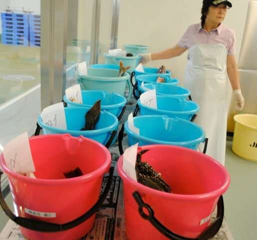 """When we catch fish and send it to market in Tokyo, some people don't want to buy it,"" said Kazunori Yoshida, director"