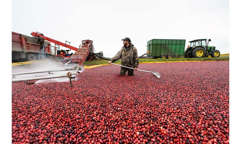Radar adds technological twist to age-old cranberry counting process