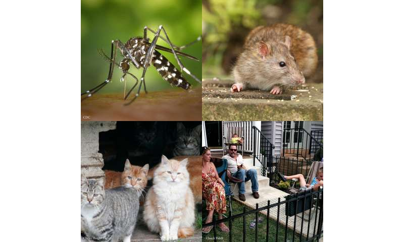 Rats, cats, and people trade-off as main course for mosquitoes in Baltimore, Md.