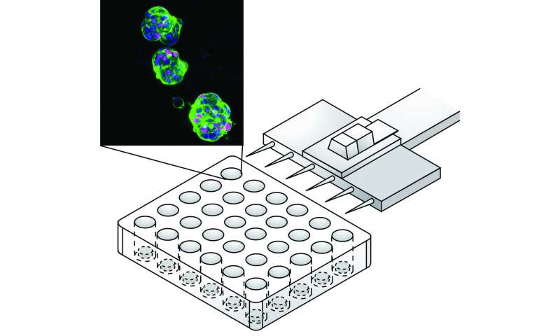 Recreating liver tumors as organoids for faster, more accurate drug screening