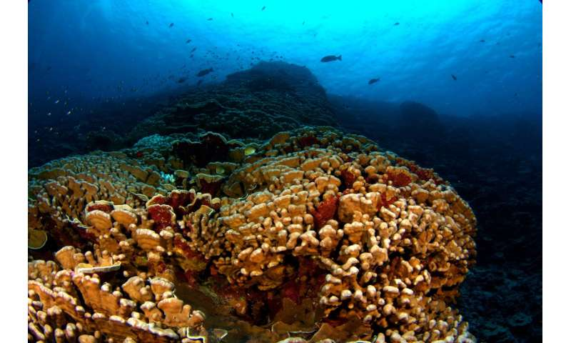 Reefs that experience frequent temperature changes most likely to resist coral bleaching