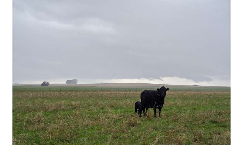 Reimbursing ranchers for livestock killed by predators supports conservation efforts