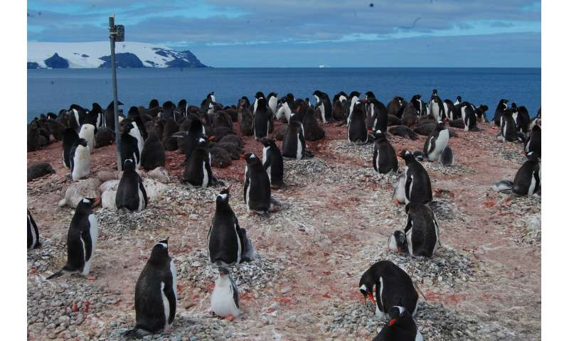 Remote camera network tracks Antarctic species at low cost
