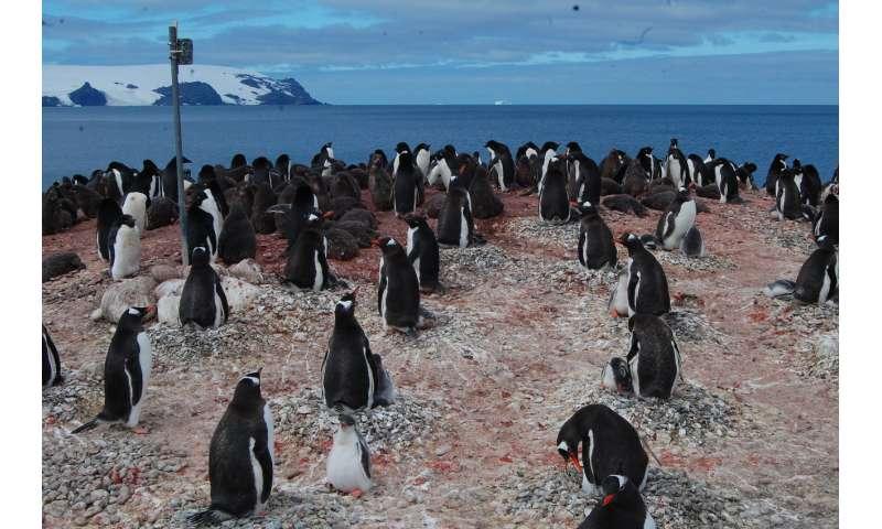 Remote camera network tracks Antarctic species at low cost