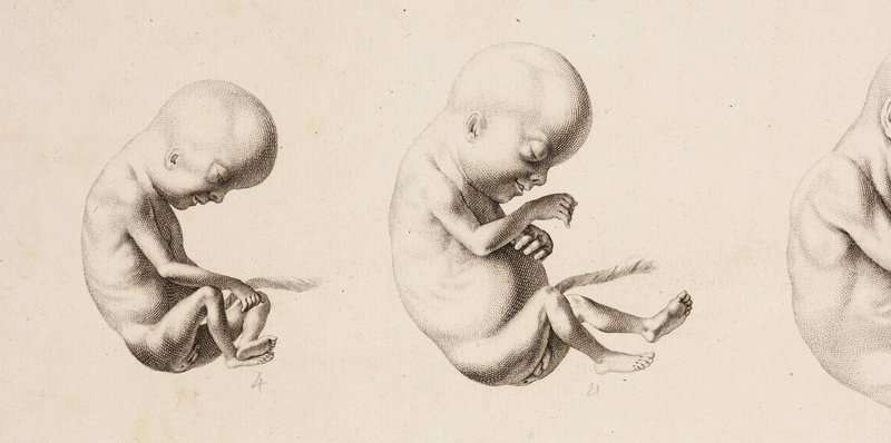 Reproduction: From Hippocrates to IVF