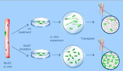 Progenitor and stem cell technologies and therapies