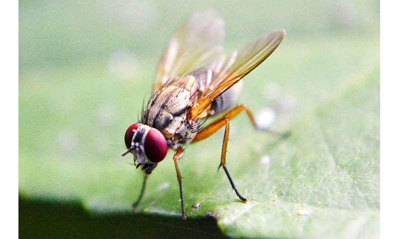 Restoring epigenetic balance reinstates memory in flies with alzheimer's disease symptoms