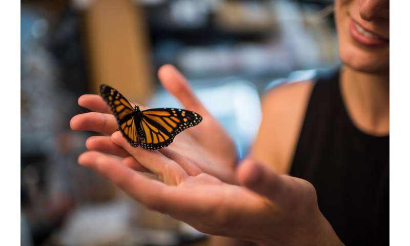 Rising carbon dioxide levels pose a previously unrecognized threat to monarch butterflies