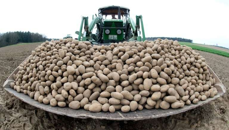 Sackfuls of trouble for a potato cartel