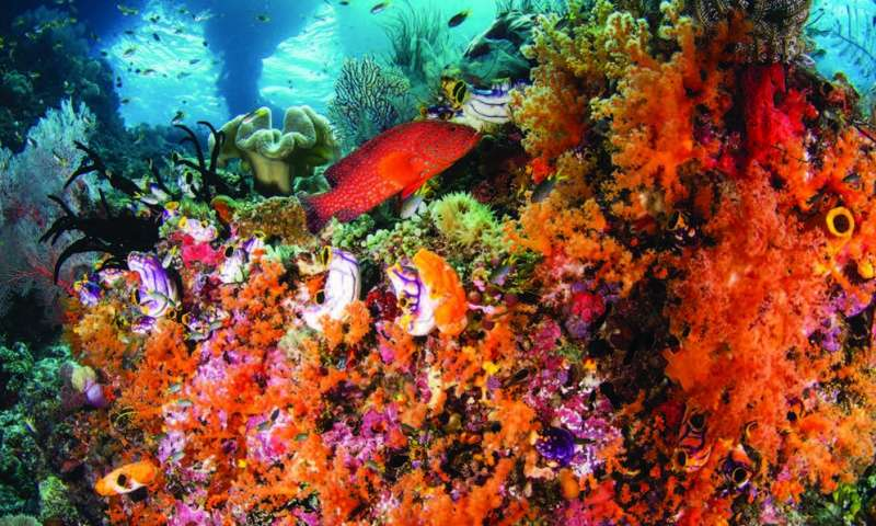 Satellites helping to preserve the health and beauty of coral reefs