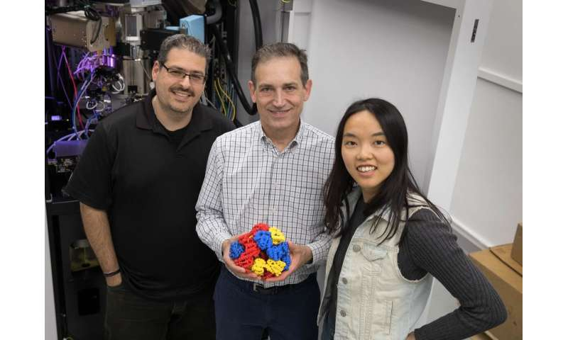 'Scaffolding' method allows biochemists to see proteins in remarkable detail
